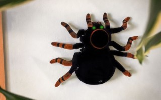 RED5 Wall Climbing Tarantula - Remote Controlled